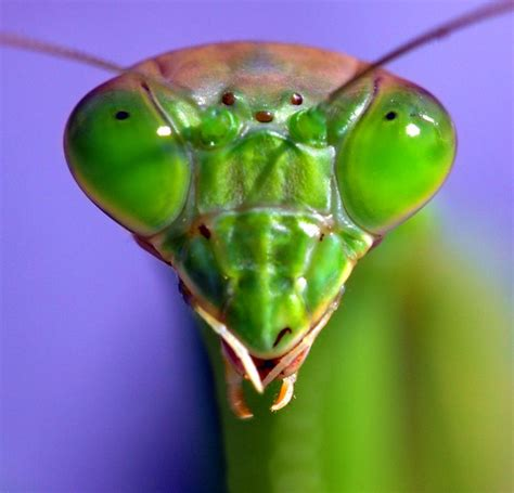books mantises photographs and