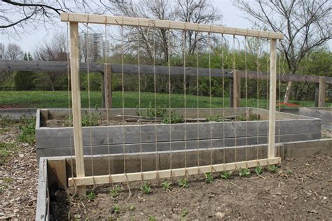 Growing Peas Trellis 301 moved permanently