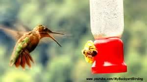 keeping bees off hummingbird feeders home improvement