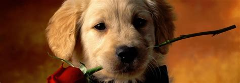 petland dogs solutions pet petland kennesaw