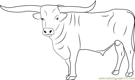 bull riding pages coloring pages