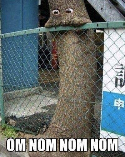 Nom Meme - 30 most funniest tree meme pictures and photos