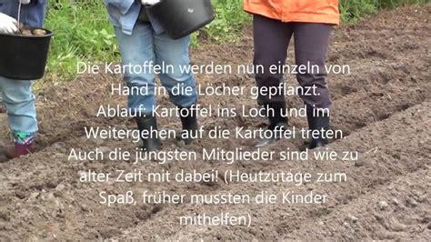 Wie Pflanze Ich Kartoffeln 4632 by Kartoffeln Pflanzen Wie Zu Oma 180 S Zeiten