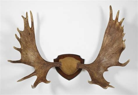 Moose Rack by 301 Moved Permanently
