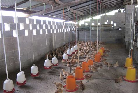 poultry farm lighting system poultry lighting lighting ideas