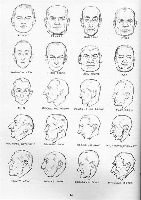 different head shapes men face profile types art reference non specific