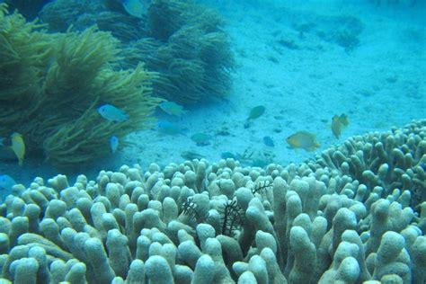 wallpaper animasi laut kumpulan gallery images and information pemandangan ikan