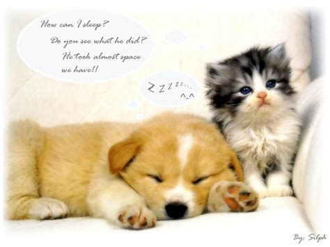 baby cats and dogs wallpaper baby animal pictures animal wallpapers puppy wallpaper