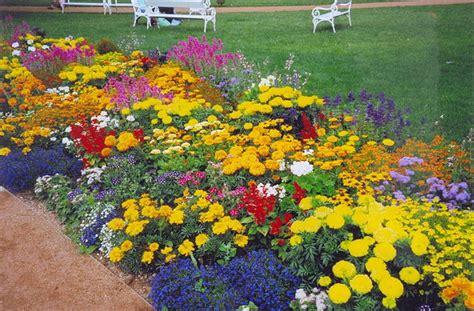 Неприхотливые цветы в саду с фото