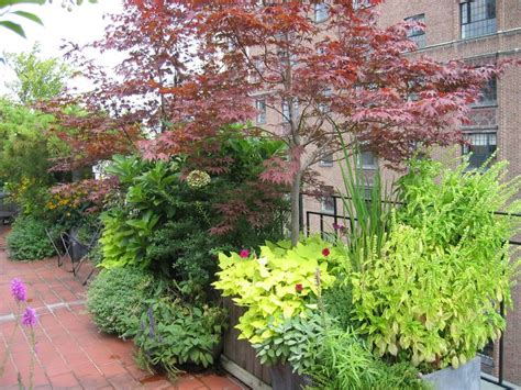 Japanese Container Garden - japanese maple container gardening for the soul pinterest