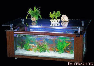 megan fox meja aquarium