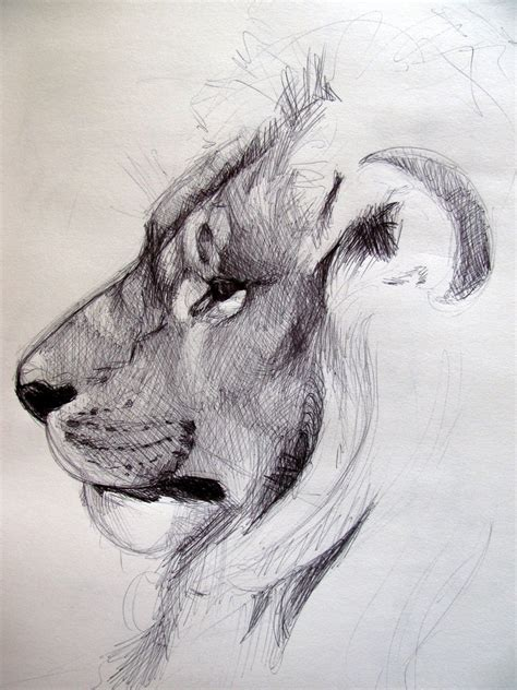 Sketches Drawings by 40 Beautiful And Realistic Animal Sketches For Your