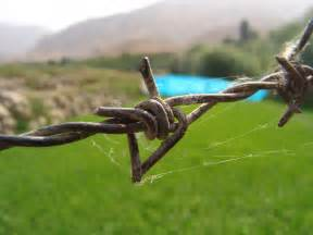 close-up view of a barbed wire Barbed
