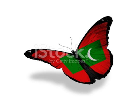 Gamis Buterfly Premium White Pasmina republic of maldives flag butterfly flying isolated on white ba stock photos freeimages