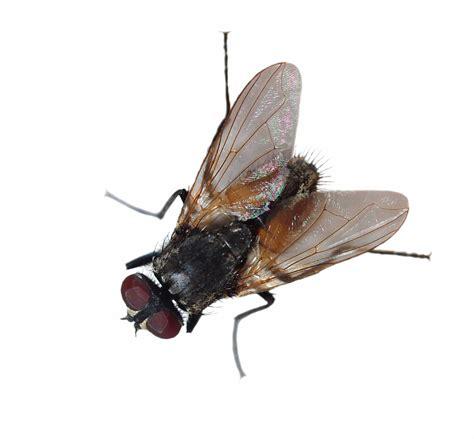 Fliegen Le