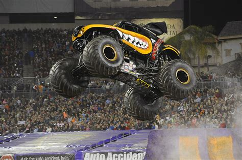 Image Gallery Monster Mutt Dog