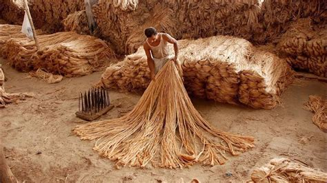 catamaran meaning in bengali historical background of jute industry golden fiber of
