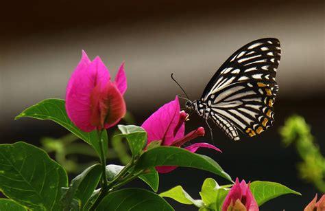 imagenes jpg mariposas wallpaper de la semana 56 mariposa en primer plano en