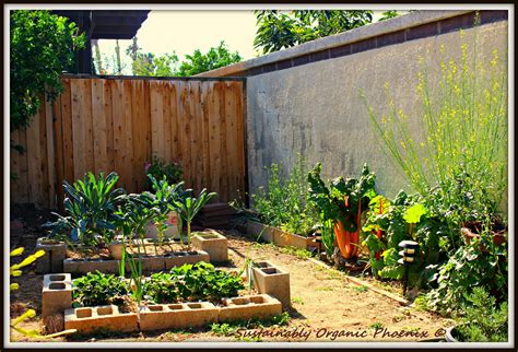 my mini backyard garden sustainably organic