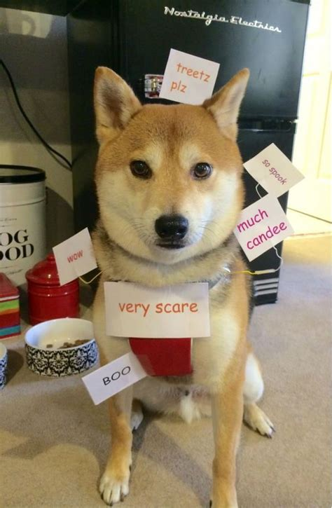 Best Doge Meme - 12 of the best dog halloween costumes of 2014 meme