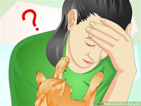 How To Make A Cat Comfortable When Dying by How To Comfort A Dying Cat