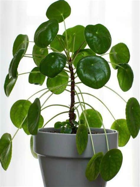 good houseplants 5 houseplants that will bring you good luck rl