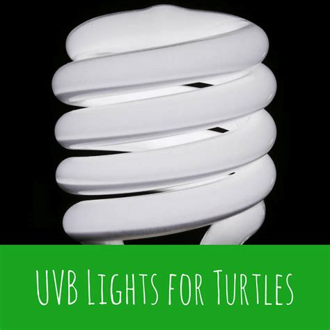 uvb l for turtles uvb lights for turtles turtleholic