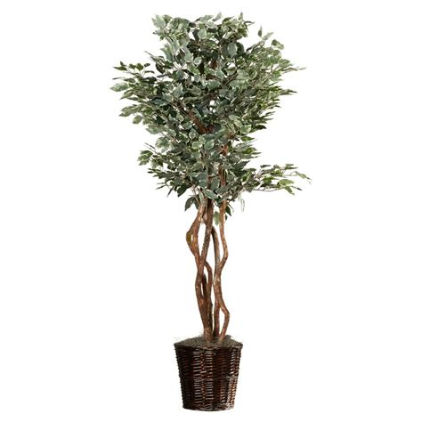 alcott hill artificial potted natural variegated ficus