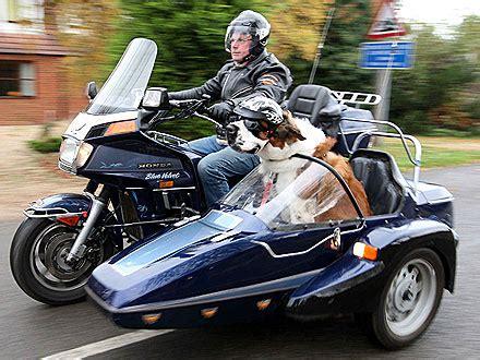 hoondapl wozenie psa na motocyklu