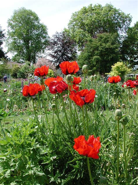 poppy gardenbanter co uk