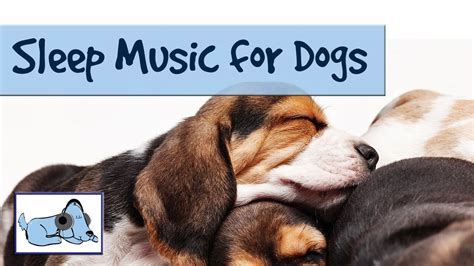 songs for dogs sleep for dogs and puppies relaxing for dogs by relaxmydog try today