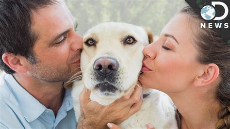 loving dogs why we dogs more than humans