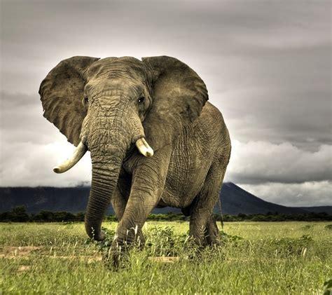 imagenes de animales uñas fondos animales salvajes imagui