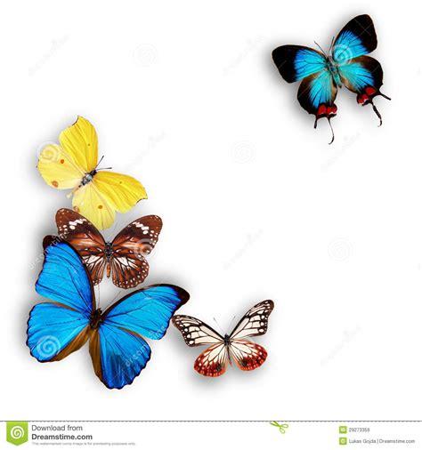 imagenes mariposas exoticas mariposas ex 243 ticas