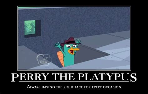 Perry The Platypus Meme - the 214 best images about phineas and ferb on pinterest