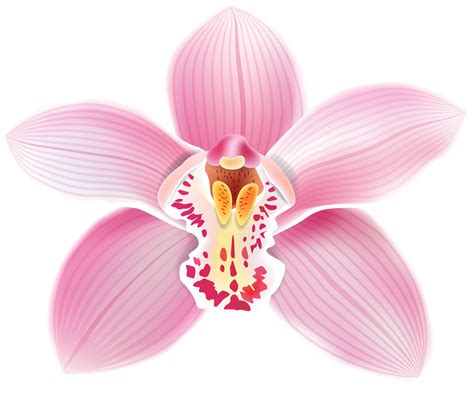Pictures Of Bow Windows pink orchid png clipart best web clipart