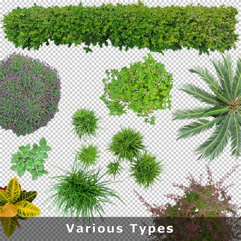 Create A Floor Plan To Scale Online Free by Top View Plants 02 2d Plant Entourage For Architecture