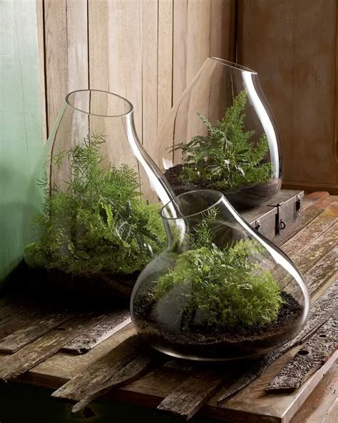 modern indoor gardens  decorative