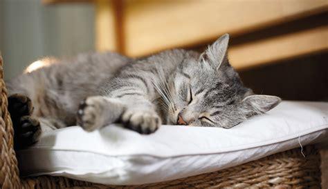 Katzen In Der Wohnung Tiergerecht Halten