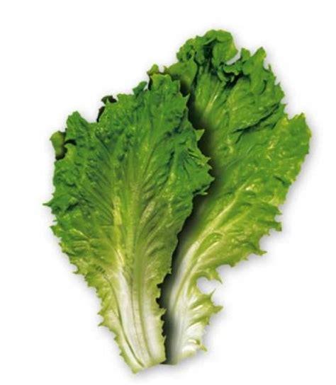 vegetables xenoblade 2 lettuce object bomb
