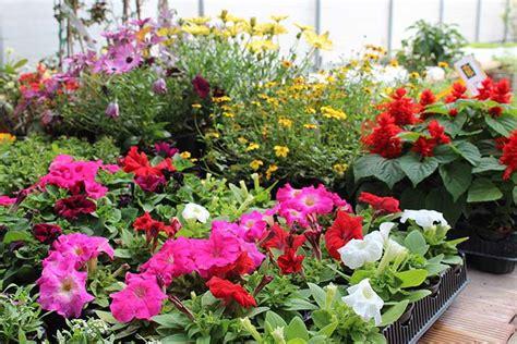 piante da giardino vendita on line piante da giardino vendita on line idea creativa della