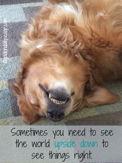 Frowning Dog Meme - captions meme quotes a collection of ideas to try