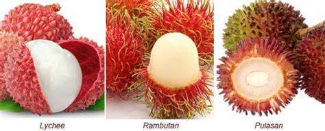 fruit similar to lychee rambutan and pulasan are also similar to lychee with
