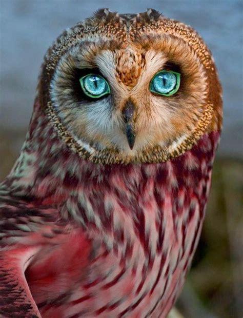 imagenes impresionantes e increibles im 225 genes de la naturaleza incre 237 bles impactantes e