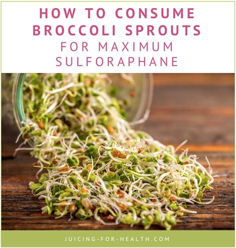 Broccoli Sprouts Helath Benefits Detox by Broccoli Sprout Juice Highest Sulforaphane Content To