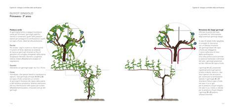 potare uva da tavola potatura vite manuale multimediale di marco simonit