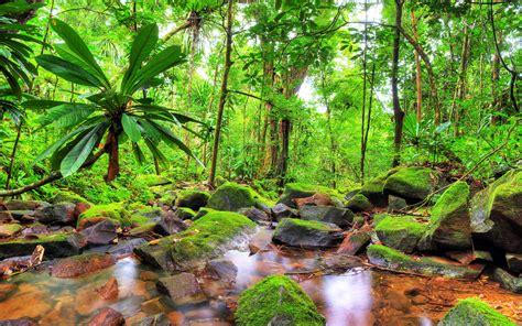 exotic tropical landscape jungle flow stones rocks
