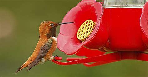 hummingbird sugar water 101 birds blooms on pinterest