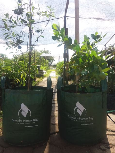 Harga Planter Bag 2018 samudra planter bag samudrabibit