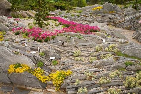 Rock Garden Nursery Cultivating Alpine Plants For Rock Gardens Space For